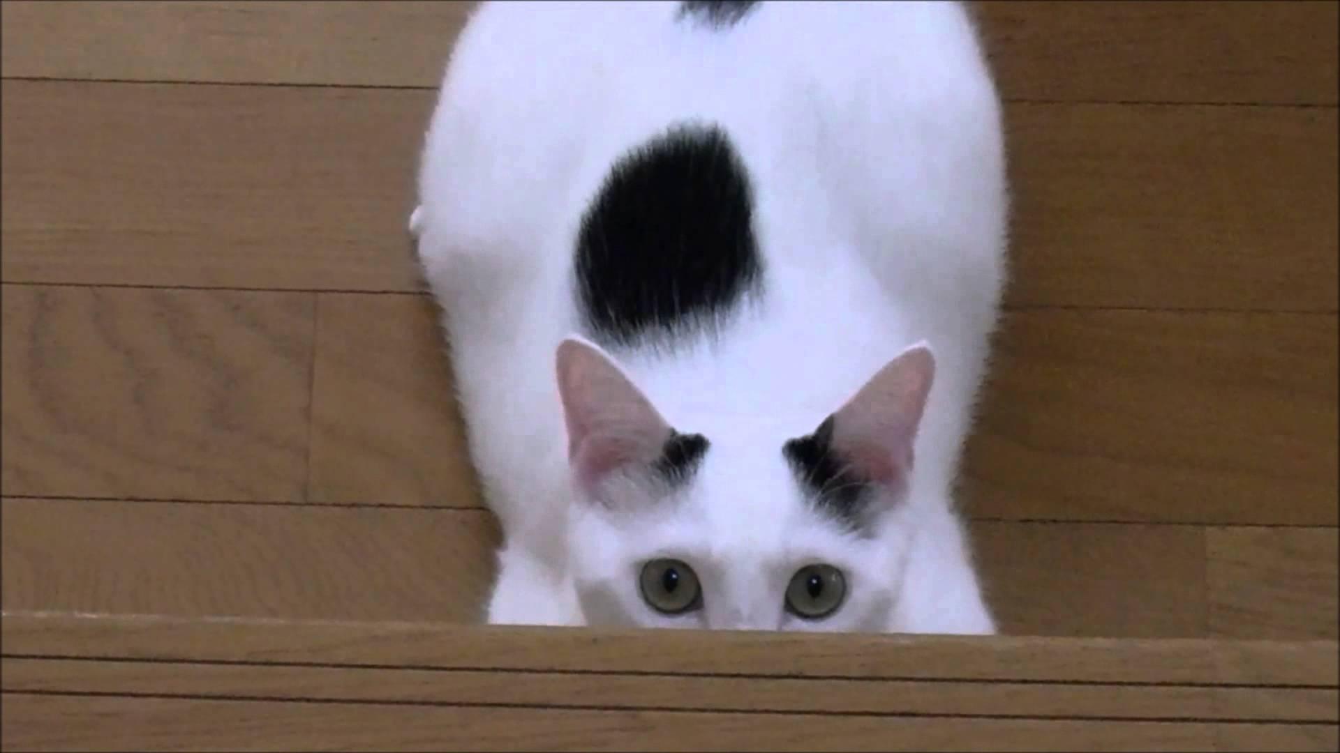 まるでスナイパー?!階段で待ち伏せする猫ちゃん