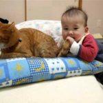 どんなにしっぽを赤ちゃんに握られても怒らないお兄ちゃん猫♪