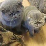 無限おやつ状態なブサ可愛い猫ちゃん達♪