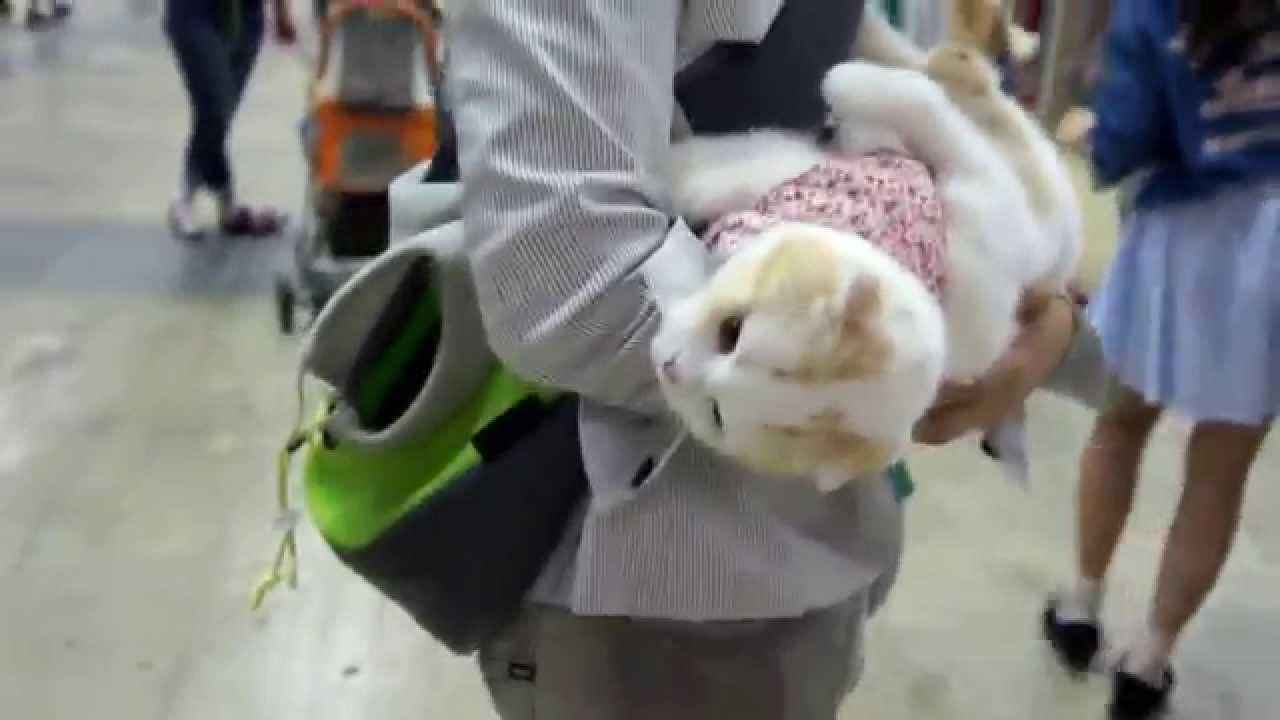 ペット博に連れてこられても動じないマインドの猫ちゃんがスゴイ!