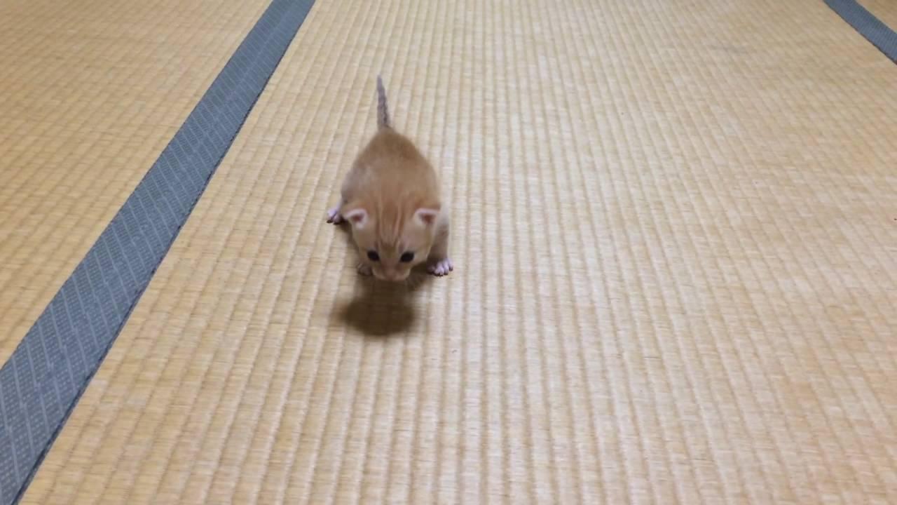 拾われた子猫ちゃんがよちよち歩きで可愛すぎる♪