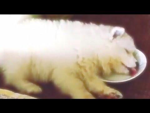 夢を見ながらミルクを飲む子犬が可愛すぎると話題に!