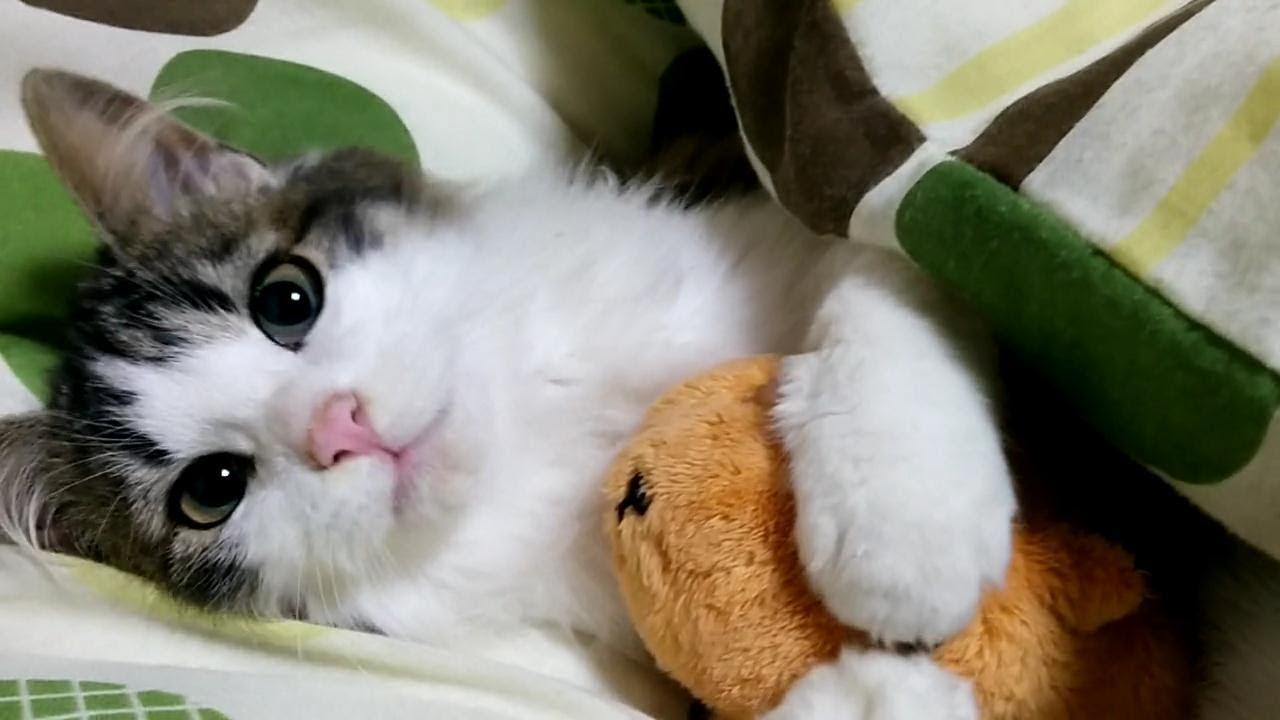 子猫は遊びたい!大人猫は寝たい!相反する2匹のじゃれあいww