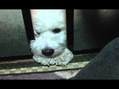 スキマから必死に手を伸ばしご主人様を呼ぶ仕草が胸キュンの犬ww
