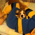 犬と一緒にゲージで寝ちゃった子供の動画♪