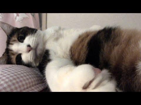 可愛い仕草の猫ちゃんにキュン死!