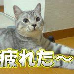 遊び疲れてバテちゃった猫ちゃん♪