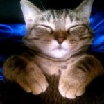 こたつで眠る子猫ちゃんが可愛すぎる~