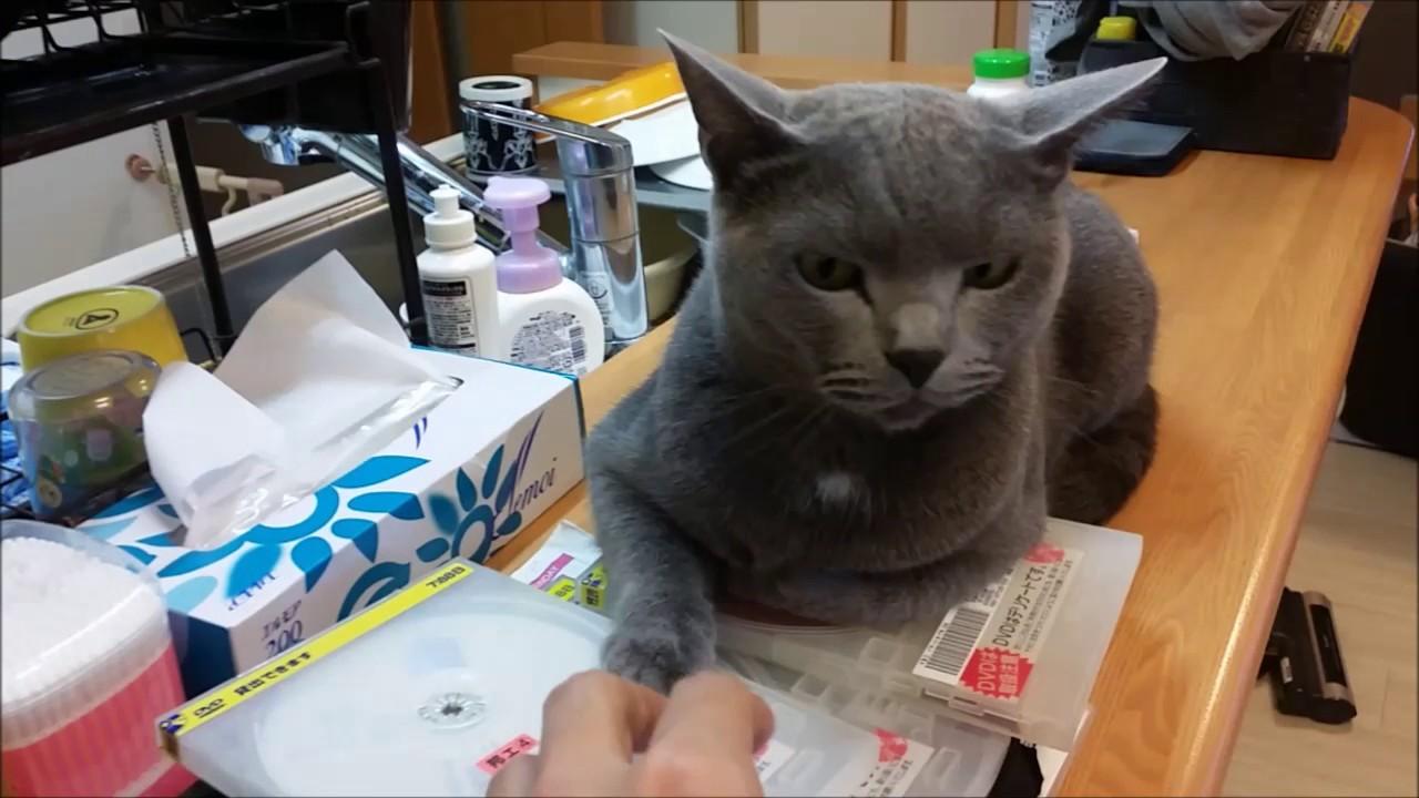 DVD返却日が今日なんだが、まるでラスボスのようにDVDを守る猫がww