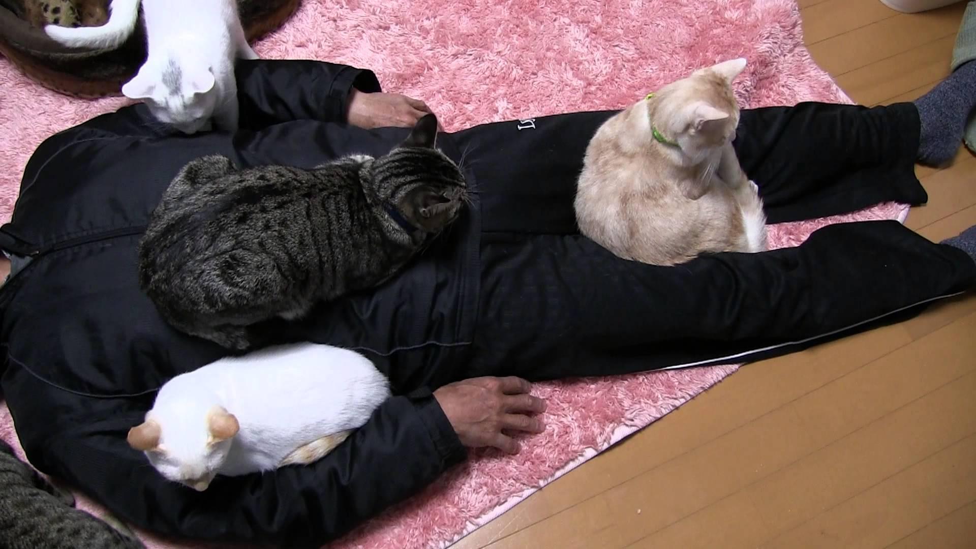 猫好きの憧れ!全ての猫に好かれるおっさん現るww