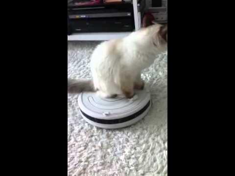 ルンバを乗りこなそうとする猫ちゃんww