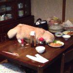 ご飯泥棒をするスコティッシュフォールド猫ww
