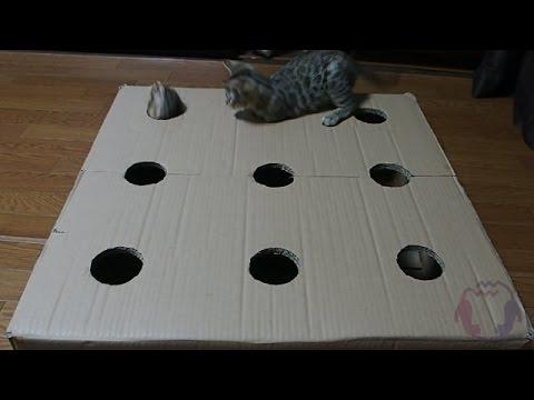 ベンガル猫の子猫たちの「ねこたたき」遊びww