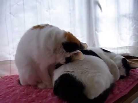 とんでもない寝方をする猫が現るww