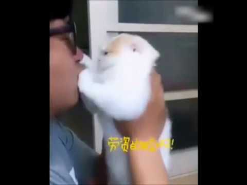 飼い主さんのキスを絶望的な表情で拒否する猫がカワユス!