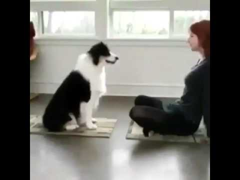 愛犬と一緒にリラックスヨガ?!
