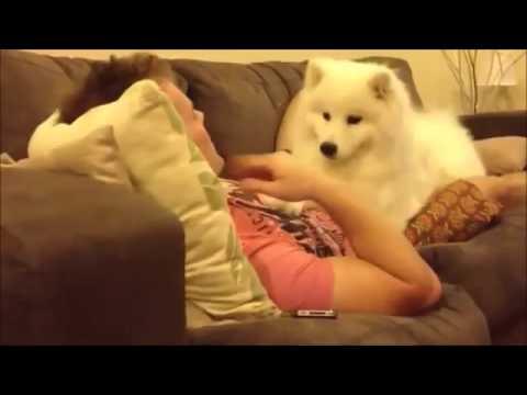 抱っこして欲しくて飼い主に甘える白いモフモフ犬