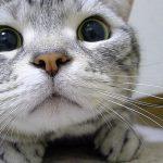 何かを必死に見つめ脚を出そうか悩む猫ちゃん