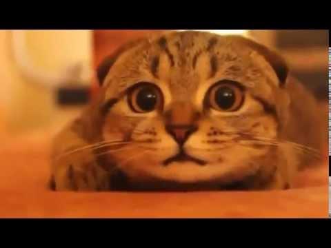 人間のような表情でホラー映画を必死に見る猫ちゃんが可愛すぎる動画