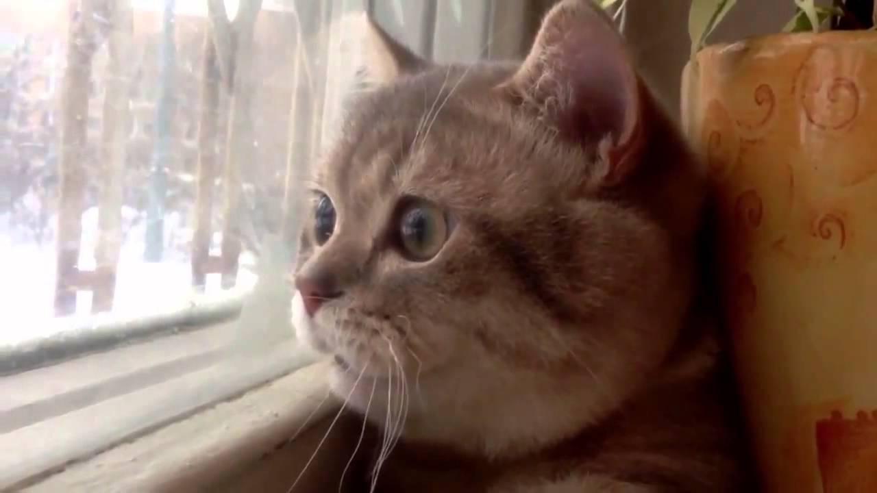 窓の外を見つめながら鼻歌を歌う猫ちゃん動画