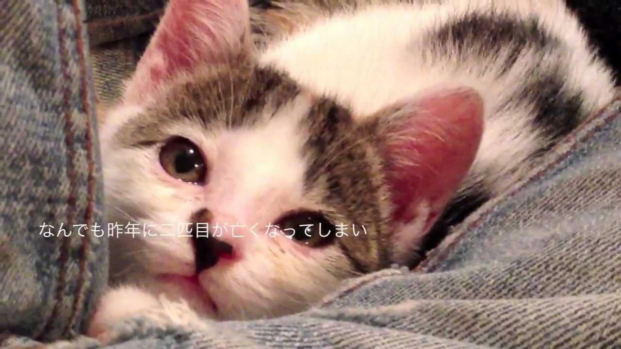 拾い主の懸命な介護により元気を取り戻した子猫ちゃん
