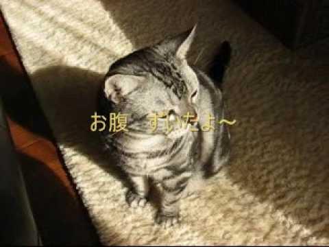 アメリカンショートヘア猫がお手してる?