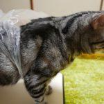 レジ袋との闘いに勝った猫が可愛い!と話題に