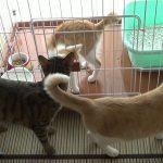 隔離された子猫と先輩猫の感動の再会