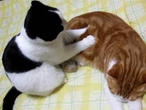 猫による猫のための猫マッサージ屋さんが可愛いと話題に