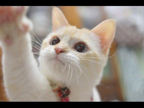ホッコリする世界中の可愛い猫の動画集
