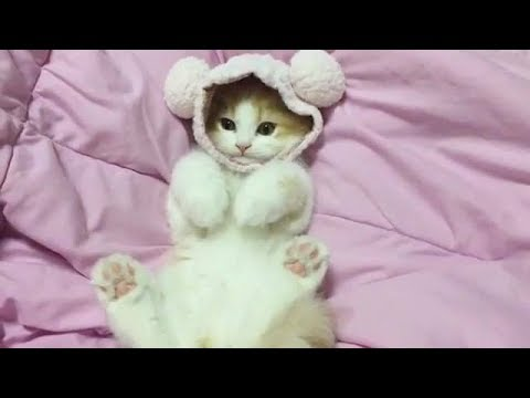 可愛い過ぎる猫ちゃん達のほっこり動画集