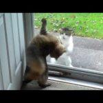 猫達による窓辺の戦いが面白いと話題に