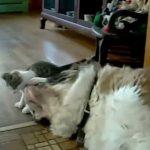 猫ちゃん達の思わずビックリしてしまう面白ハプニング動画集