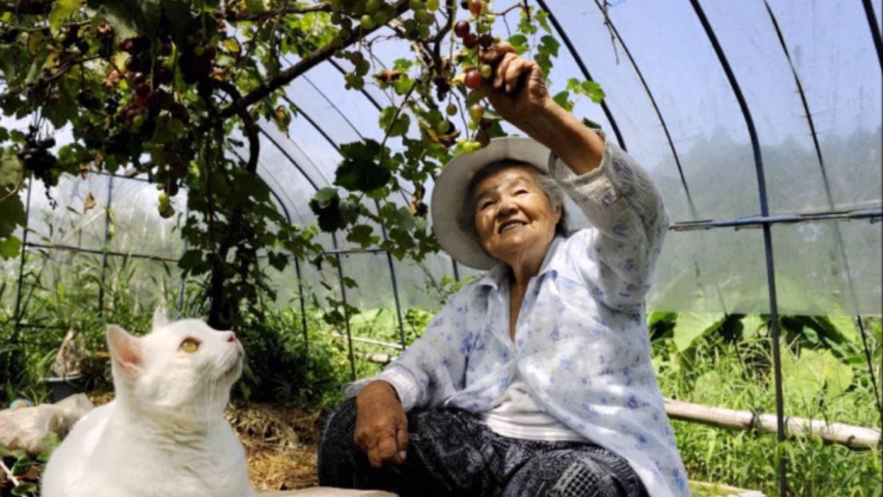 耳が不自由だけど福を招く猫とおばあちゃんの感動の触れ合い