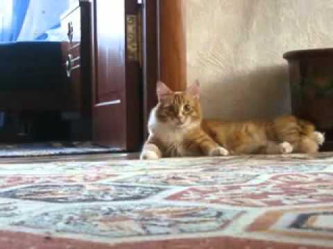爆笑必死!!二足歩行でフェードアウトする猫の笑劇動画ww