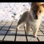 かわいい赤ちゃん犬たちと過ごす至福の動画
