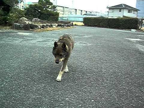 ガレージにて在りし日の飼い犬のケン君