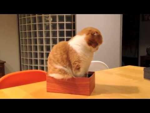 箱が小さすぎて入れない?!必死で考える猫がかわいい動画!