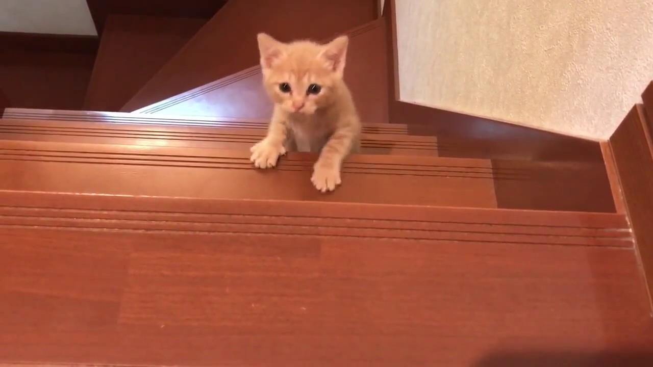 かわいすぎ!子猫が奮闘しながら階段を踏破する動画