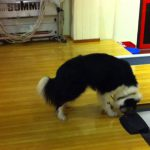 ツルツル滑る?!ボーリング場の犬が面白い動画