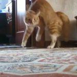 見てるこっちが衝撃!!驚いた猫ちゃん二足で逃げる!