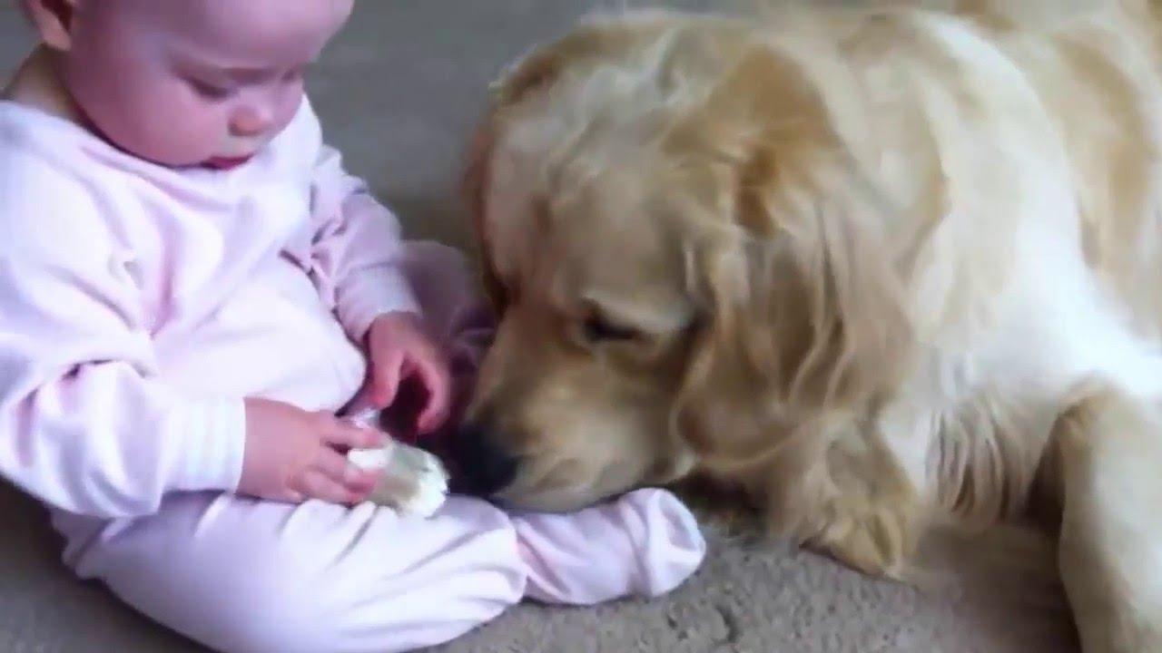 とっても仲良しな犬と人間の赤ちゃん!