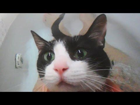 飛んで行くほどお風呂が大好きな猫の動画