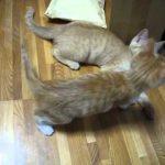激かわ!!必殺猫パンチ!!動画
