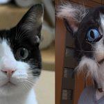 飼い主が変装して帰宅?!猫の反応をご覧ください