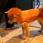 服を着せられてテンション駄々下がりの犬の服を脱がすと・・・?