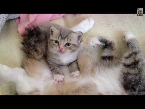 ママ猫のミルクを飲む姿に悶絶!