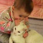 赤ちゃんに優しすぎる猫を発見!まるでお兄ちゃんみたいな動画