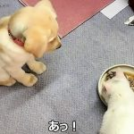 一生懸命に目の前のご飯を「待て」する子犬が可愛すぎる!