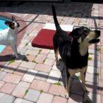 はしゃいでプールに滑り落ちる犬の動画ww